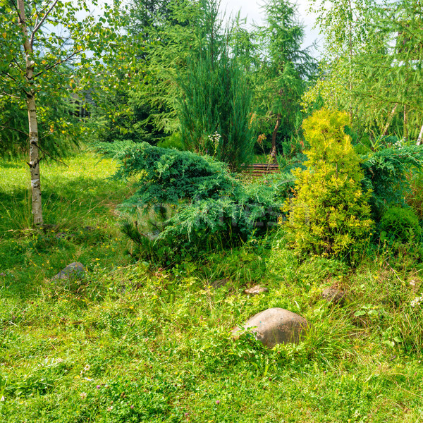 Green garden in the park Stock photo © vapi