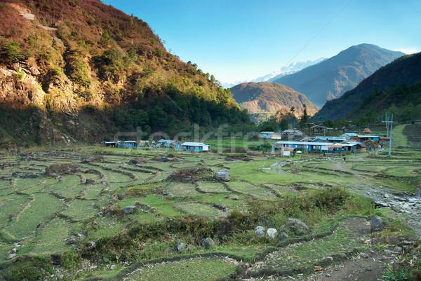 Riz champs collines vert paysage Népal Photo stock © vapi