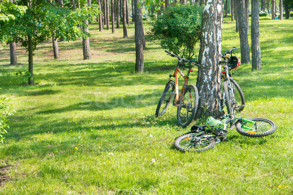 Bikes lying near tree Stock photo © vapi