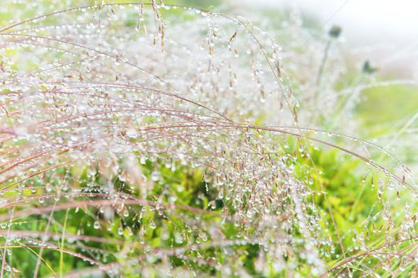 ストックフォト: 緑 · ぬれた · 草 · 水滴 · マクロ · ショット