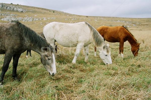 Three grazing horses of different colors. Stock photo © vapi