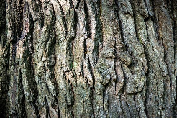 Zdjęcia stock: Brązowy · dąb · kory · puszka · drzewo · charakter