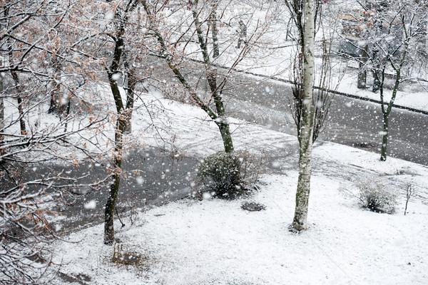 Kar yağışı kış park siyah ağaçlar kar Stok fotoğraf © vapi