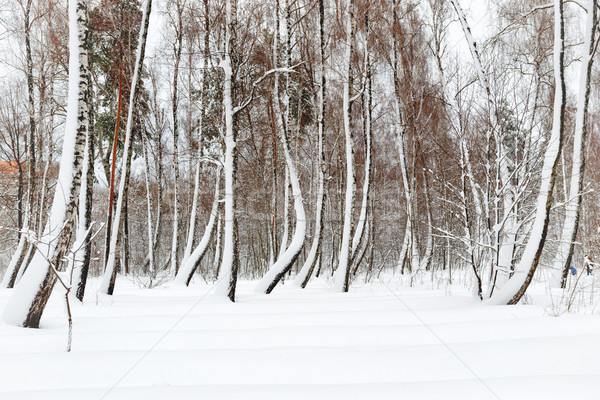 Winter bos witte bomen sneeuw hemel Stockfoto © vapi