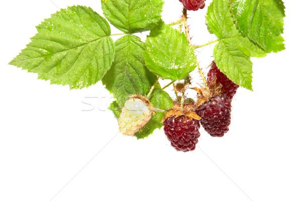 Bramen groene bladeren geïsoleerd witte voedsel natuur Stockfoto © vapi