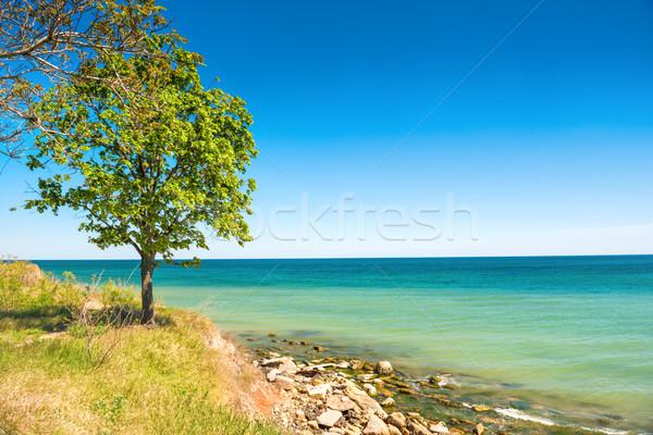 Big green tree on the beach Stock photo © vapi