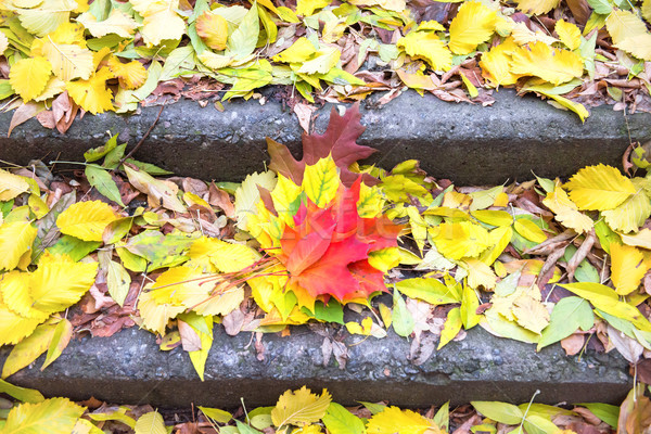 Colorful leaves on the steps of staircase Stock photo © vapi