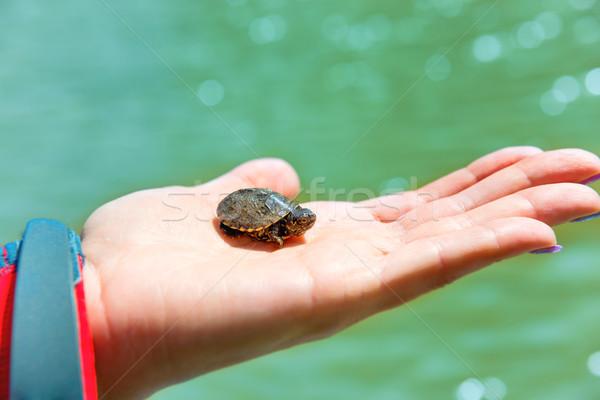 Pequeno mar tartaruga para cima mão Foto stock © vapi