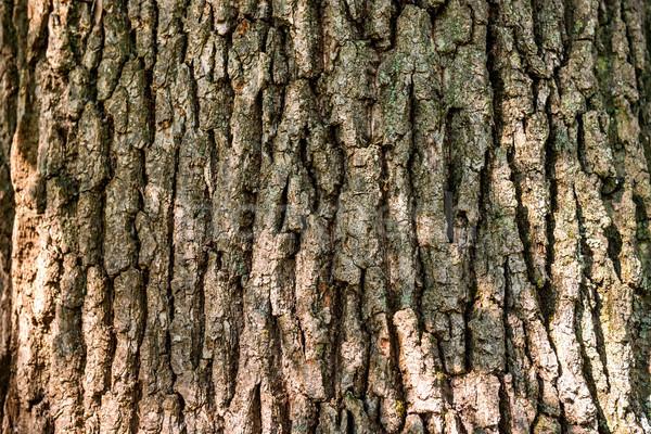 Meşe havlama doku makro atış meşe ağacı Stok fotoğraf © vapi
