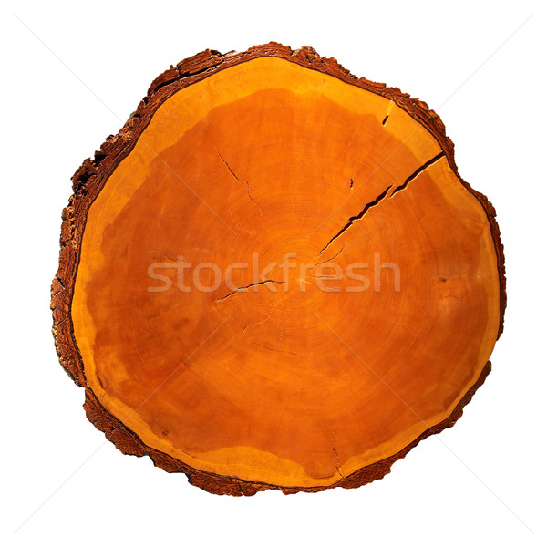Wooden stump Stock photo © vapi