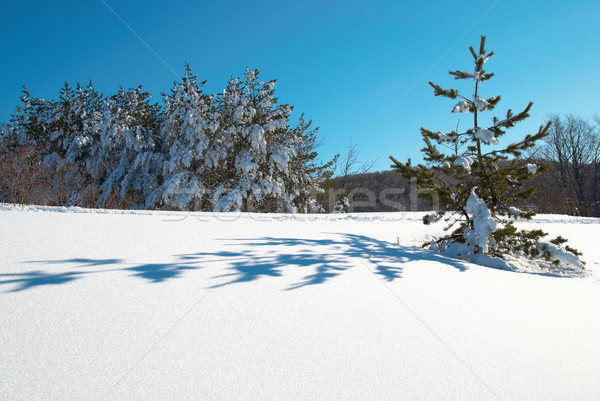 Kış derin kar ayak izleri gökyüzü ağaç Stok fotoğraf © vapi