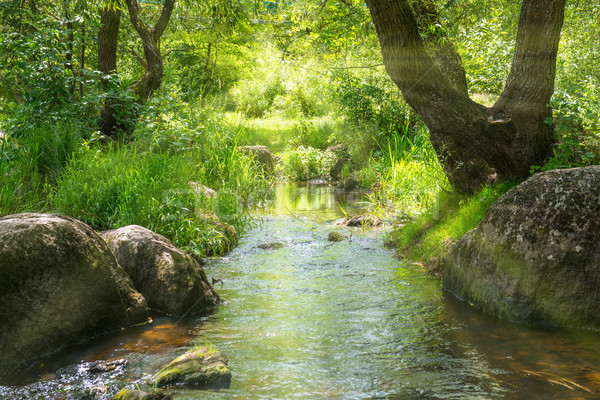 Stream in the tropical forest Stock photo © vapi