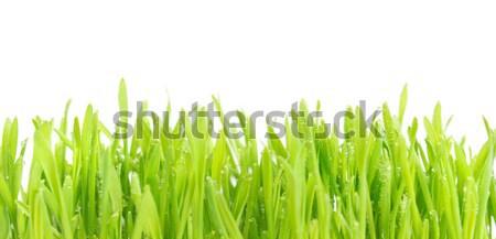 Zielone mokro trawy kroplami wody odizolowany biały Zdjęcia stock © vapi