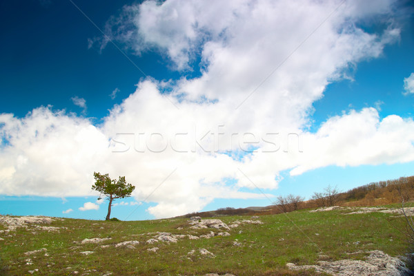 Lonely tree Stock photo © vapi