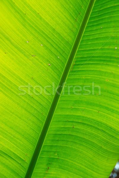 Stock fotó: Friss · zöld · banán · levél · konzerv · használt