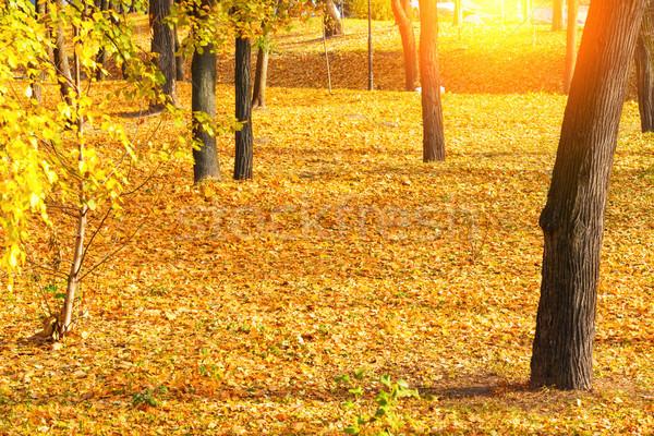 Najaar park bomen oranje natuur blad Stockfoto © vapi