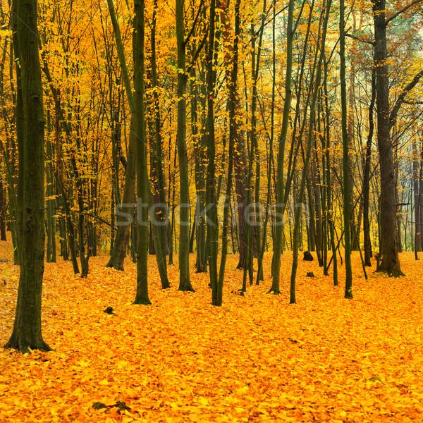 Beautiful fallen park Stock photo © vapi