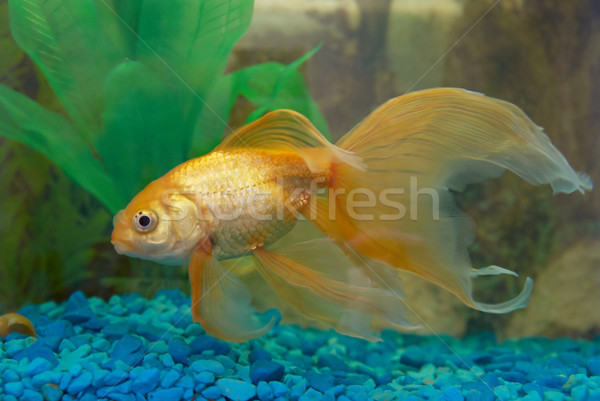 熱帯 魚 水族館 眼 顔 ストックフォト © vapi