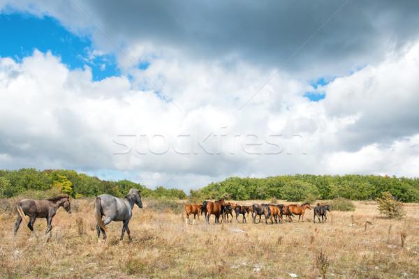 Troupeau chevaux domaine paysage champ d'herbe bébé Photo stock © vapi