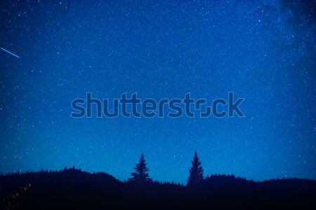 Dark blue night sky above the mystery forest Stock photo © vapi