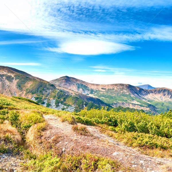 Mountains landscape with forest Stock photo © vapi