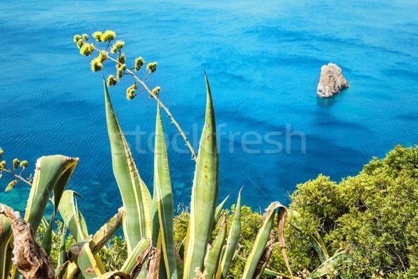Agavé virág gyönyörű kilátás trópusi tenger Stock fotó © vapi