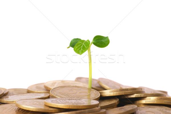 зеленый завода растущий монетами деньги финансовых Сток-фото © vapi