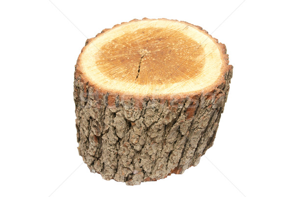 Wooden stump isolated on white. Stock photo © vapi