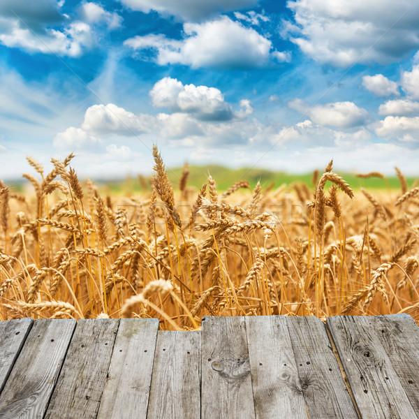 表示 木製 橋 金 麦畑 新鮮な ストックフォト © vapi
