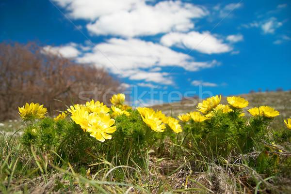 黄色の花 雲 空 花 自然 背景 ストックフォト © vapi