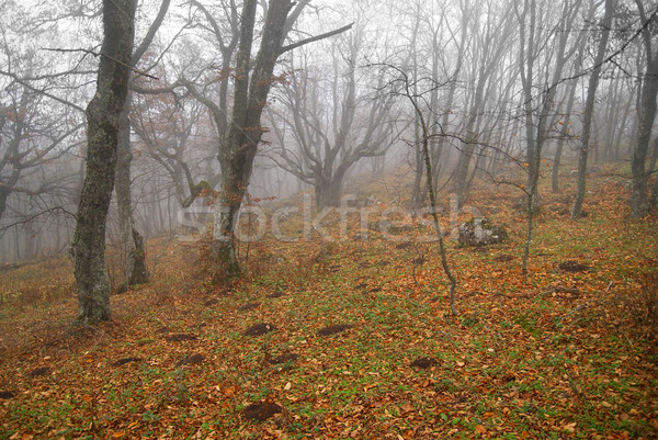 Autunno misty foresta foglie abstract panorama Foto d'archivio © vapi
