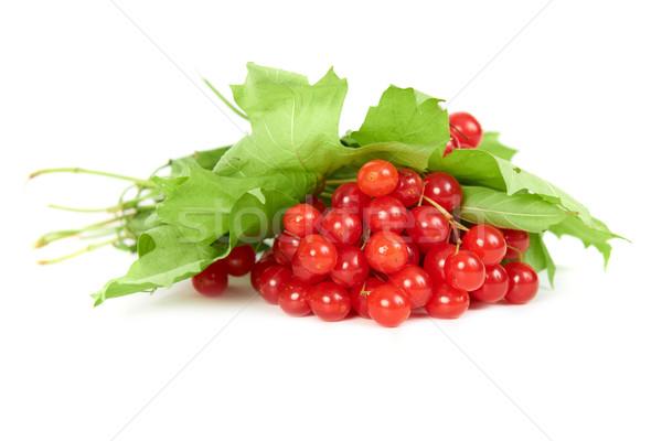 ストックフォト: 赤 · 液果類 · バラ · 緑の葉 · 孤立した