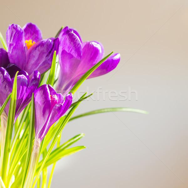 Első tavaszi virágok virágcsokor lila puha fókusz Stock fotó © vapi