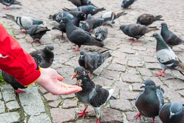 Molti mano uccelli città piazza Foto d'archivio © vapi