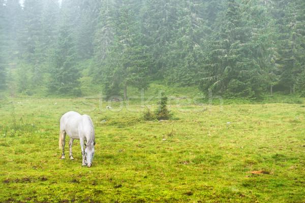 Fehér ló zöld mező köd tavasz erdő Stock fotó © vapi