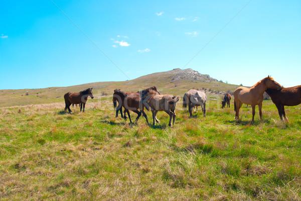 Herde Pferde Bereich grünen Gras Familie Gras Stock foto © vapi