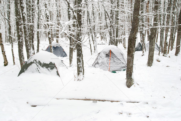 Winter tent camp Stock photo © vapi