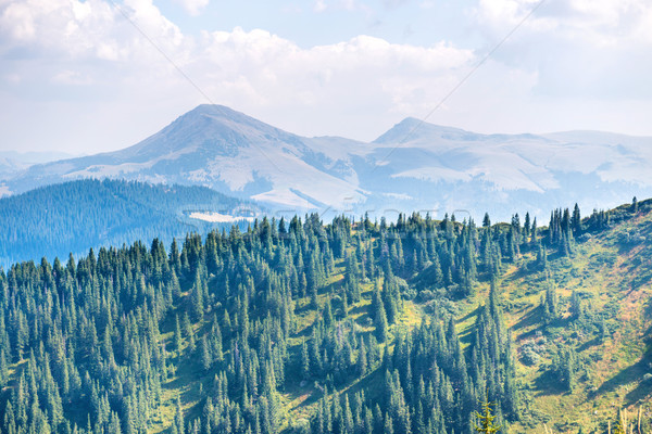Forest in the mountains Stock photo © vapi