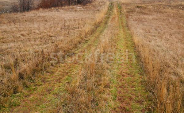 çim alanı yol doğa manzara yaz Stok fotoğraf © vapi