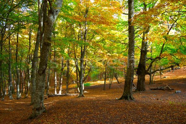 ősz erdő meleg napos idő út fa Stock fotó © vapi
