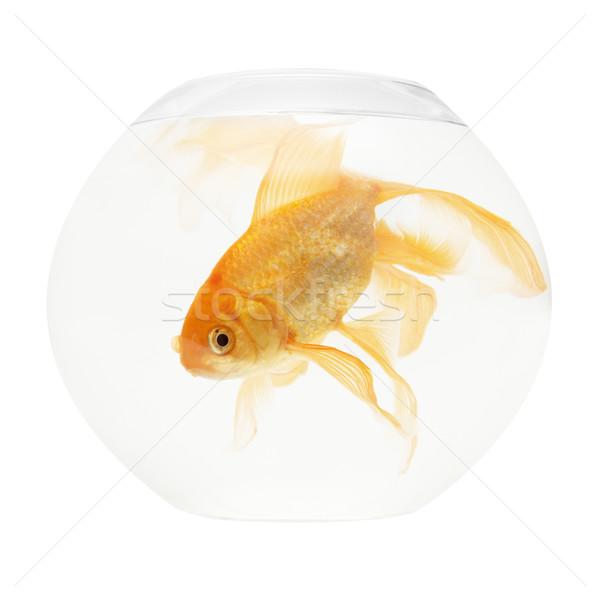 魚 水族館 孤立した 白 自然 ストックフォト © vapi