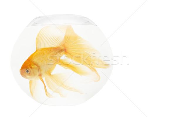 рыбы аквариум изолированный белый природы Сток-фото © vapi