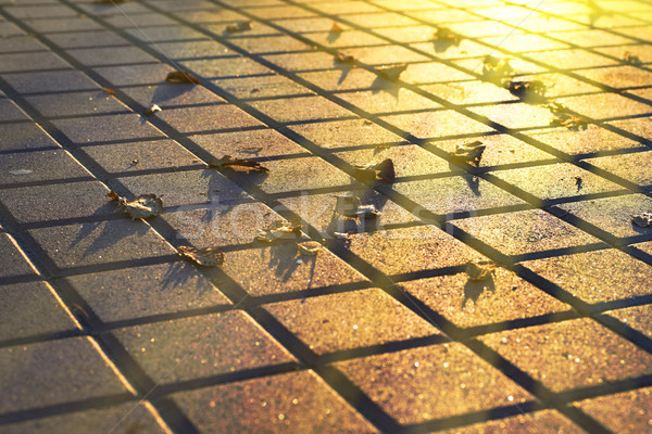 Fallen leaves on the pavement Stock photo © vapi