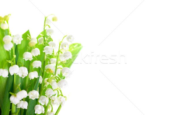 Lírios vale flores brancas isolado branco flor Foto stock © vapi