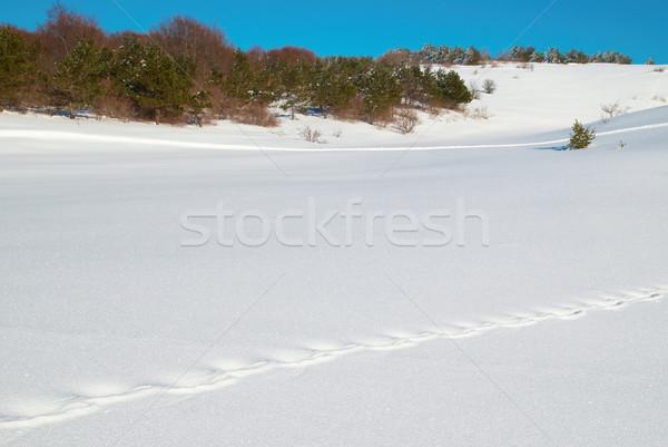 Winter diep sneeuw voetafdrukken hemel boom Stockfoto © vapi