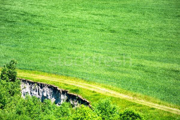 Green field of wheat Stock photo © vapi