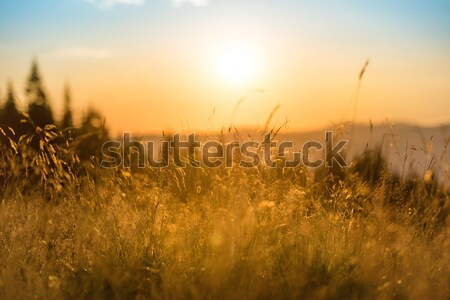 Naplemente hegyek száraz fűmező nagy ragyogó Stock fotó © vapi