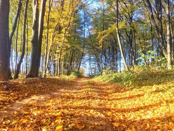 Zdjęcia stock: Jesienią · kolorowy · lasu · pomarańczowy · pozostawia · czerwony