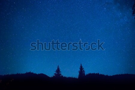 Stock photo: Dark blue night sky above the mistery forest