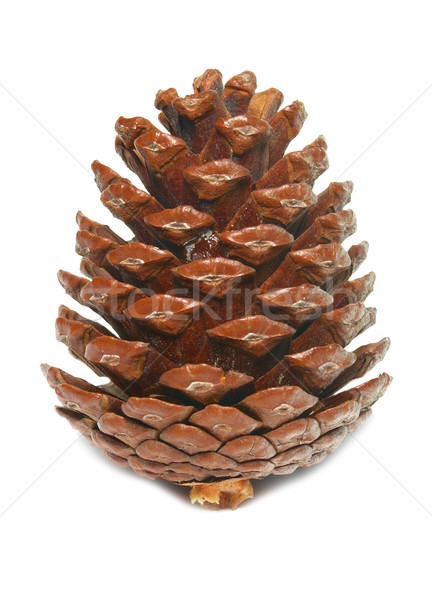 Brown pine cone isolated on white. Stock photo © vapi
